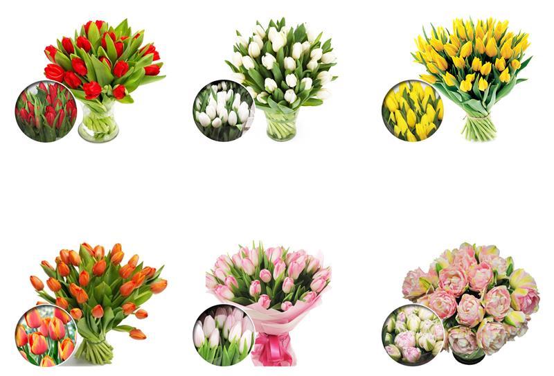 Tulipany cięte KRÓLIK